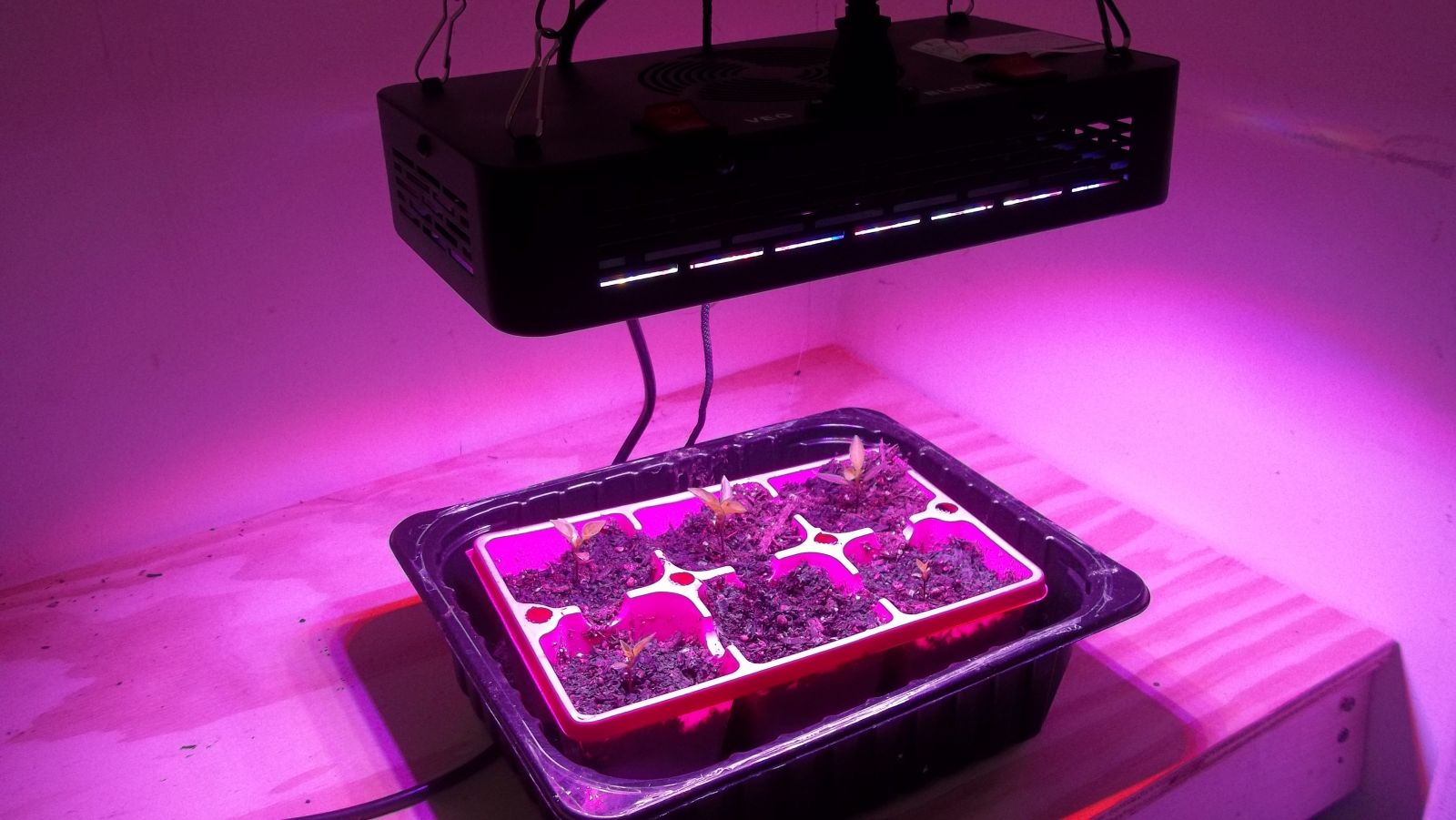 Niello 300 watt LED Grow Light Review