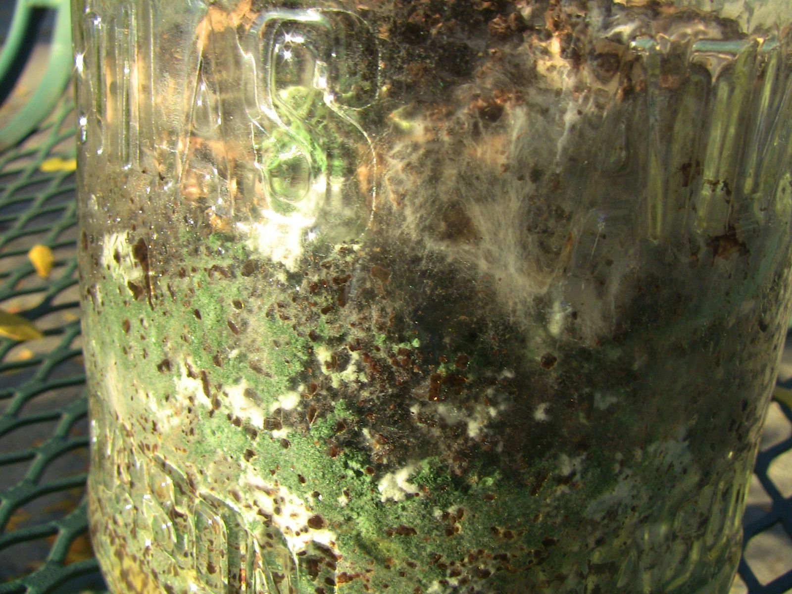 Mushroom Mycelium Contaminated With Green Mold