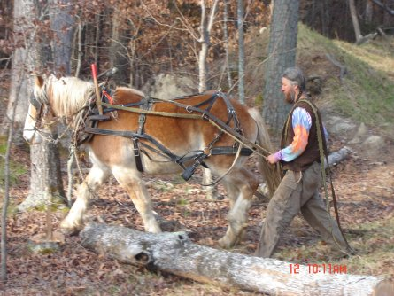 Eustace Conway Hauling Logs